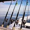 Half Off Shark-Fishing Charter