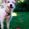 Up to 52% Off Dog-Care Services