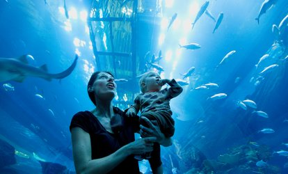 Dubai Aquarium with Global Village or City Tour for One or Two at Coast to Coast Tourism (Up to 37% Off)