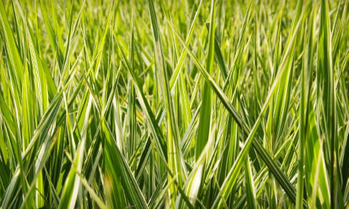 XL100Store.ca: Two, Four, or Six 1 kg Bags of Canada Green Velocity Grass Seed from XL100Store.ca (Up to 53% Off)