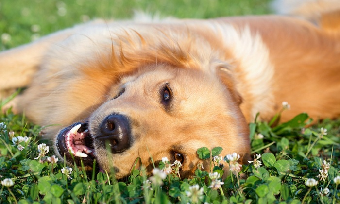 Up To 51 Off Dog Grooming At Pet Supplies Plus