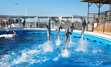 Annual Pass With Optional Guests to Gulfarium Marine Adventure Park (40% Off). Three Options Available.