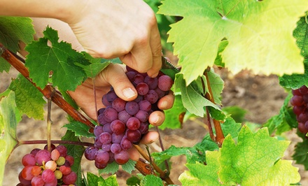 groupon daily deal - Reliance Red Seedless Grape Plant