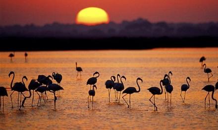 El Rocío: hasta 3 noches para 2 personas en habitación doble con opción a desayuno en Hostel Flamingo