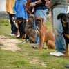51% Off Dog Training at Texas Doghouse