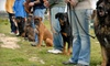 Texas Doghouse - Westwood North: $49 for a 60-Minute Private Dog-Training Session at Texas Doghouse ($99 Value)