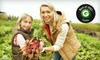 Full Circle Farms - CORP HQ: One Large, Medium, Small, or Mini Box of Organic Produce from Full Circle (Up to 52% Off)