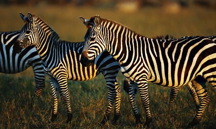 Lazy L Safari Park - Randol: Admission for Four or Six to Lazy L Safari Park (50% Off)