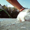 60% Off Sturgeon- or Salmon-Fishing Trip for Two