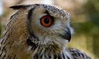 Birds of Prey Experience with Photo Opportunity and Farm Entry for Up to Four with Excel Falconry