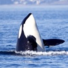 40% Off Whale-Watching Trip