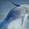Up to 56% Off Marine-Life Adventure