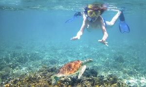 Pure Aloha Adventures: 90-Minute Guided Snorkel Tour of Hanauma Bay for One, Two, or Four from Pure Aloha Adventures (38% Off)