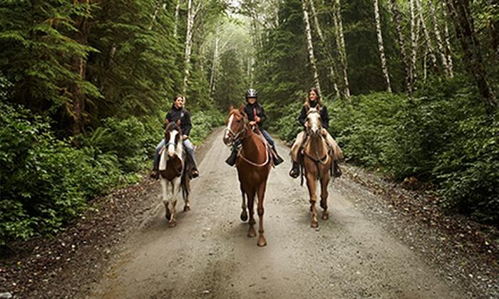 Shadowfax Farm Sporthorses - Magnolia: $100 for $200 Worth of Services at Shadowfax Farm Sporthorses