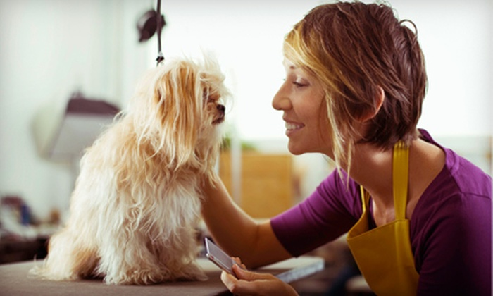 Dog Island Grooming - Lindenhurst: Bathing or Grooming Package for a Small, Medium, or Large Dog at Dog Island Grooming (Up to 51% Off)
