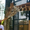 Up to 29% Off at Central Florida Zoo & Botanical Gardens