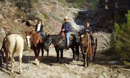 Two- or Three-Hour Guided Horseback Trail Ride for One or Two from Cowboy Way Adventures (Up to 52% Off)