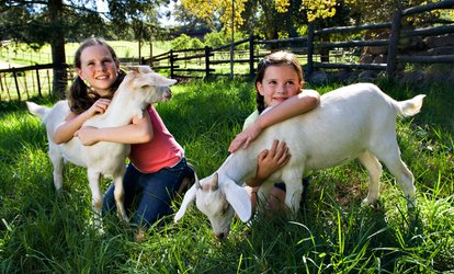 Up to 40% Off Petting Zoo Admission at Montebello Barnyard Zoo