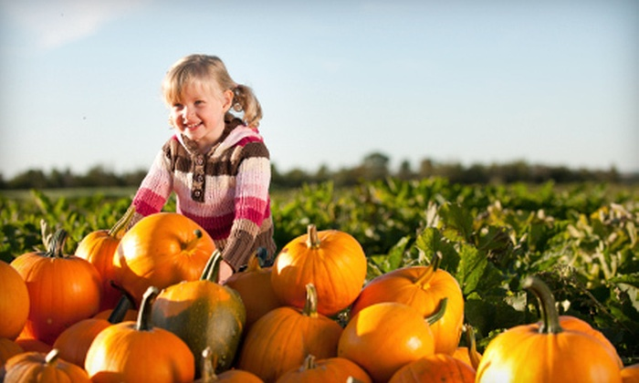 Nichols-Boyd Pumpkin Patch - 4: Tour for Two or Four with Hayride and Pumpkin at Nichols-Boyd Pumpkin Patch (Up to Half Off)