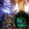 Sea Life Grapevine Aquarium – Up to 40% Off