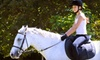 Vector Equestrian - Hamilton: Two, Four, or Six 60-Minute Private Horseback-Riding Lessons at Vector Equestrian (Up to 61% Off)