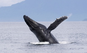 Three-hour Whale- And Dolphin-watching Tour For Two Or Four (up To 53% Off) *