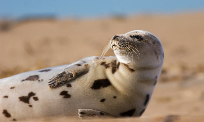 Captain Lou Fleet - Nautical Mile: Two-Hour Seal-Watching Tour for Two or Four from Captain Lou Fleet (Up to 53% Off)
