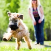 61% Off Private Obedience-Training Session