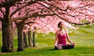 Michelle Mazur - Yoga Teacher Training: $1,900 for 200-Hour Yoga-Teacher Training from Michelle Mazur - Yoga Teacher Training ($4,200 Value)
