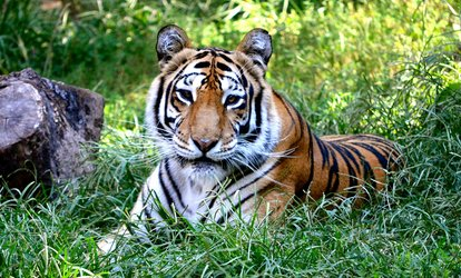 Up to 40% Off Admission to Crown Ridge Tiger Sanctuary