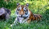 Up to 35% Off Admission to Crown Ridge Tiger Sanctuary