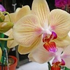 The Garden House - Hayward Park: $30 Worth of Indoor Plants and Orchids