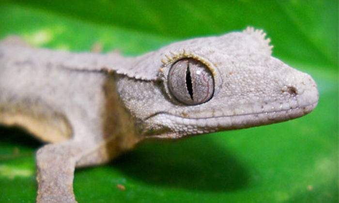 Cold Blooded Encounters - Monroe: Off-Season Visits for Two or $39 for $100 Toward School Programs or Birthday Parties at Cold Blooded Encounters