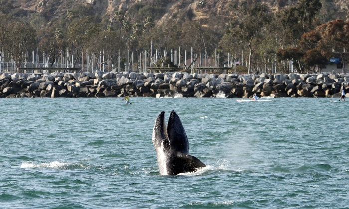 Dana Wharf Whale Watching - Dana Point: Whale-Watching Cruise for Adult, or Cruise for Child with Optional Book from Dana Wharf Whale Watching (Up to 61% Off)