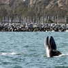 Up to 61% Off Whale Watching