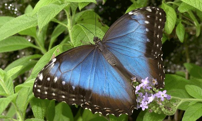Cambridge Butterfly Conservatory - Cambridge Butterfly Conservatory: Visit for Two or Four to Cambridge Butterfly Conservatory (Up to 50% Off)