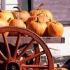 Up to 56% Off at Pumpkin Village Pumpkin Patch