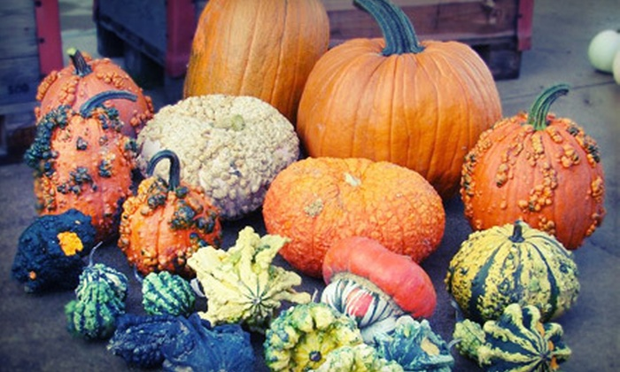 Fun Pumpkins - Fillmore: $17 for Pumpkins, Autumn Decorations, and One Large & One Specialty Small Bag of Kettle Corn at Fun Pumpkins ($37 Value)