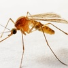 Up to 73% Off from Sovereign Pest Control