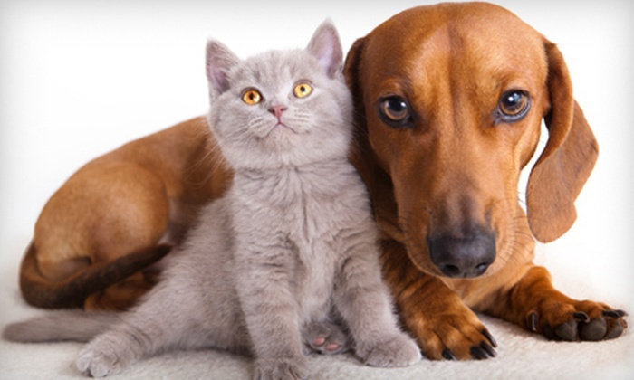 Shallowford Animal Hospital - Chattanooga: $29 for a Pet Exam, Rabies and Distemper Vaccinations, and Heartworm Test at Shallowford Animal Hospital ($130 Value)