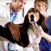 Up to 64% Off Veterinary Services in Fort Mill