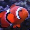 Aquarium of Boise – Up to 42% Off Visit
