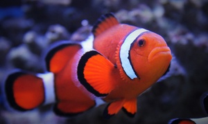 Aquarium of Boise: Aquarium Visit for Two, Four, or Six at Aquarium of Boise (Up to 42% Off)