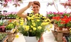 West Side Nursery - West Side Nursery: $17.50 for $30 Worth of Hanging Baskets, Annuals, Vegetable Starts, and Herbs at West Side Nursery