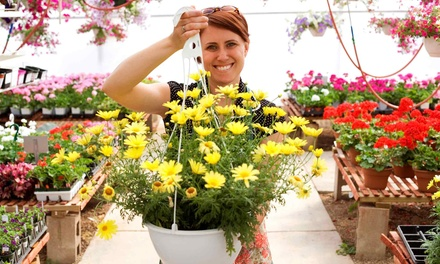 $17.50 for $30 Worth of Hanging Baskets, Annuals, Vegetable Starts, and Herbs at West Side Nursery