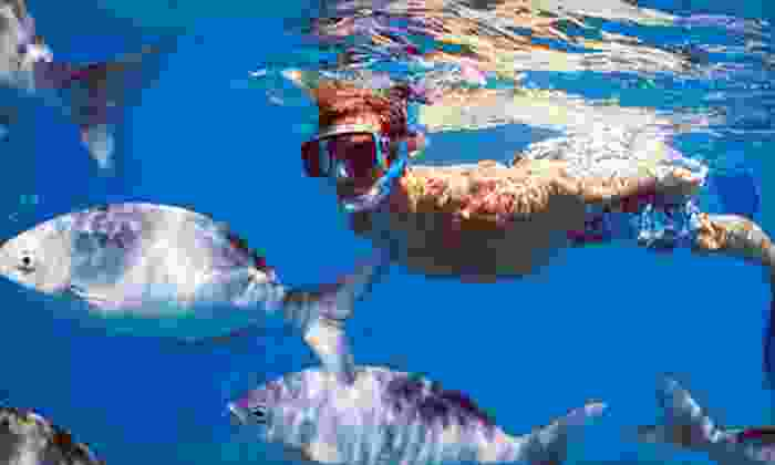 Destin Snorkel - Destin Harbor: Snorkel Excursion for Two or Snuba Tour for Two from Destin Snorkel (Half Off)