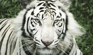 Up to 38% Off Admission to Cat Tales Zoological Park at Cat Tales Zoological Park, plus 6.0% Cash Back from Ebates.