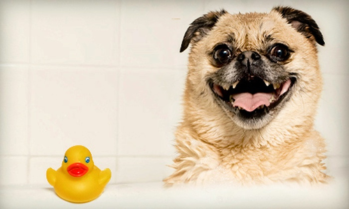 Tidy Dogs Grooming Spa - Thunderbolt: Full Grooming Package for a Small, Medium, or Large Dog at Tidy Dogs Grooming Spa (Up to 55% Off)