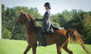 First Class Horse Complex: Up to 50% Off Horse Workshop at First Class Horse Complex