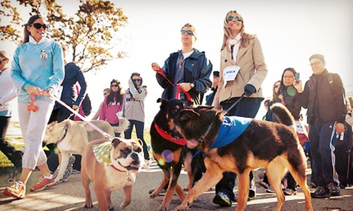 PAWS Chicago - Montrose Harbor: Run for their Lives 8K-Race or 4K-Dog-Friendly Walk Registration for One or Two from PAWS Chicago (Up to 53% Off)